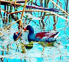 Moorhen and chick by ♥⊱ B. Randi Bailey