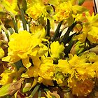 ...it&#x27;s almost Spring! daffodils...1400 visualizzaz a gennaio 2013-VETRINA RB EXPLORE 17 MARZO 2012 ---- by Guendalyn