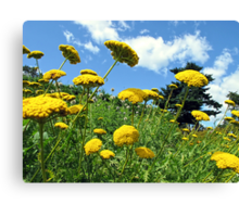 Yellow Flowers on a Grassy Hillside under Fluffy White Clouds & Blue Skies in Canada Canvas Print