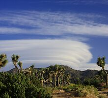 Clouds at Joshua Tree by arr333