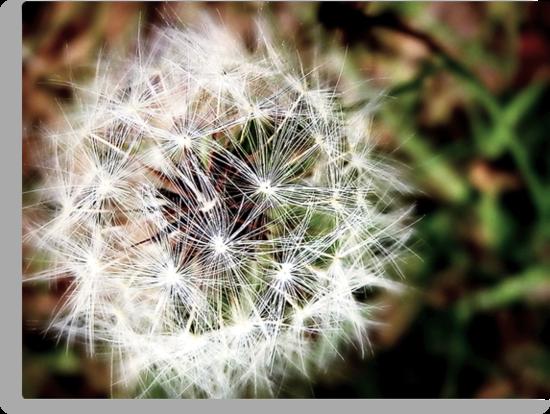 Nature's wish by Scott Mitchell