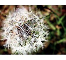 Nature's wish Photographic Print