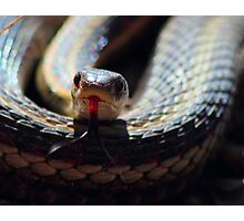 Snake Tongue Photographic Print
