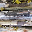 11/3 logs by Evelyn Bach