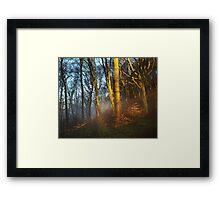 Castle Coch Grounds Framed Print