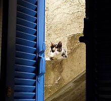 Athenian Cat by James Stratford