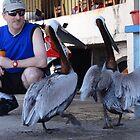 The Tourist And The Pelicans - El Tourista Y Los Pelícanos by Bernhard Matejka