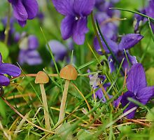 Mushrooms and Wild Violets by relayer51