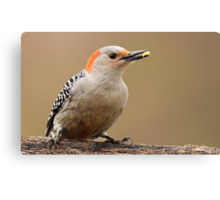 Female Red Bellied Woodpecker Canvas Print