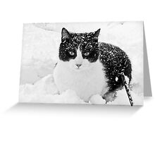 Snow Kitty Black & White Greeting Card