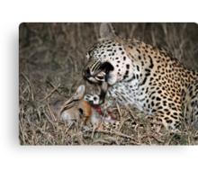 Leopard/duiker interaction 6-the end Canvas Print