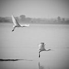 Take-off by Biren Brahmbhatt