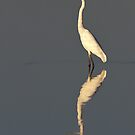 Eastern Great Egret by Helen Lewis