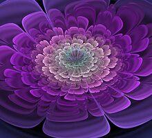 Purple Bloom by James Brotherton