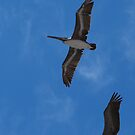 Pelican in the Sky - Pelícano en el Cielo by PtoVallartaMex