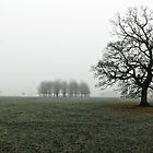 English Oak on a Foggy Morning by MarkBigelow