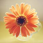 Orange Daisy by Hilary Walker