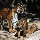 Tiger and Cub by zzsuzsa