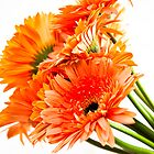 Orange Gerberas by Janette Anderson