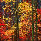 AUTUMN FOREST by Chuck Wickham