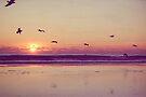 take flight by Jamie McCall