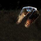Eagle Owl II by Phiggys