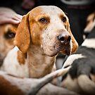 Hound Dogs 1 by MarceloPaz