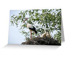 Stork family on the nest  Greeting Card