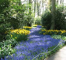 River of Blue - Flower Lane in the Keukenhof Gardens by BlueMoonRose