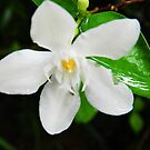 White Jasmine by G1PSY