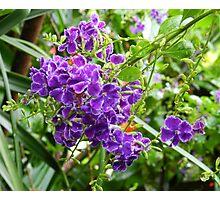 Purple Flowers Photographic Print