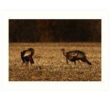 Turkeys in Golden Field Art Print