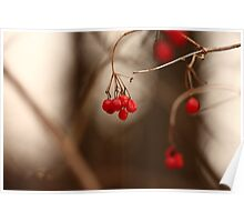 Abstract Red Berries Poster
