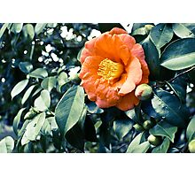 bloomtime Photographic Print