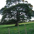 The old Tree, Rustic Irish Fields, 2007 by ArleneMartine