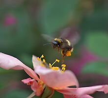 Dance of the Bee by Linda Cutche