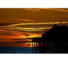 Birds at Sunset Photographic Print