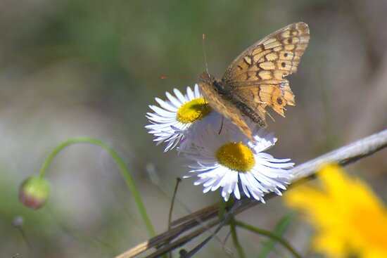 Spring in Texas by Barbara Shallue