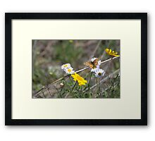 Texas Spring Color Framed Print