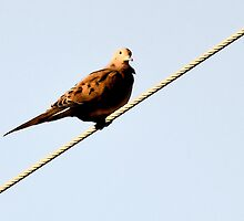Bird on a wire. by JELProductions