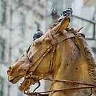Horse with birds in NYC by James Stratford