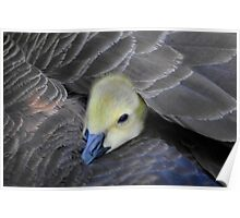 there is no better place than under mom's wing Poster