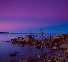 Rose Bay Calm by Lincoln Stevens