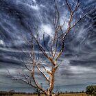 Boort tree by John Ferguson
