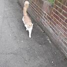cat/top of my road -(140312)- digital photo by paulramnora