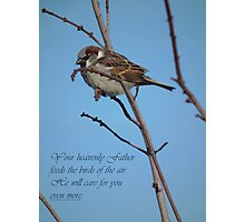 Your Heavenly Father Feeds the Birds Photographic Print