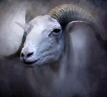 Dall Sheep Portrait by Norman Rawn