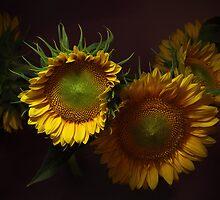 Just Sunflowers... by EbyArts