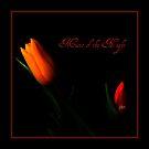 Music of the Night by Brenda Boisvert