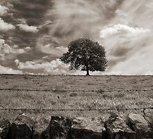 The lonely tree, Derbyshire landscape by Magdalena Warmuz-Dent